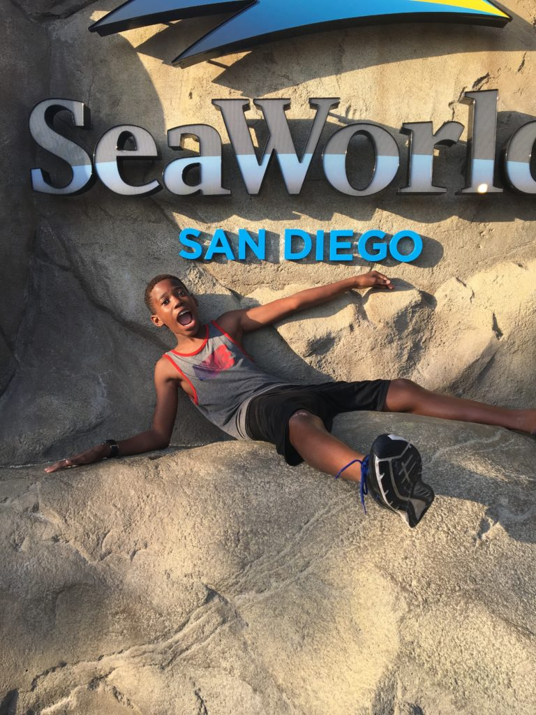 SeaWorld-San-Diego-768x1024 Things To Do In SeaWorld San Diego